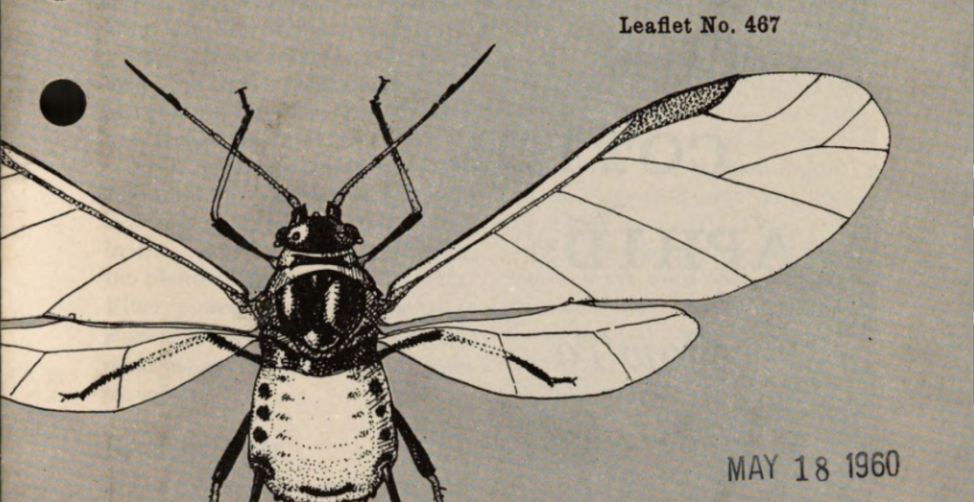 "Illustration of a cotton aphid with text ""Leaflet no. 467"" and a library stamp of May 18,1960"